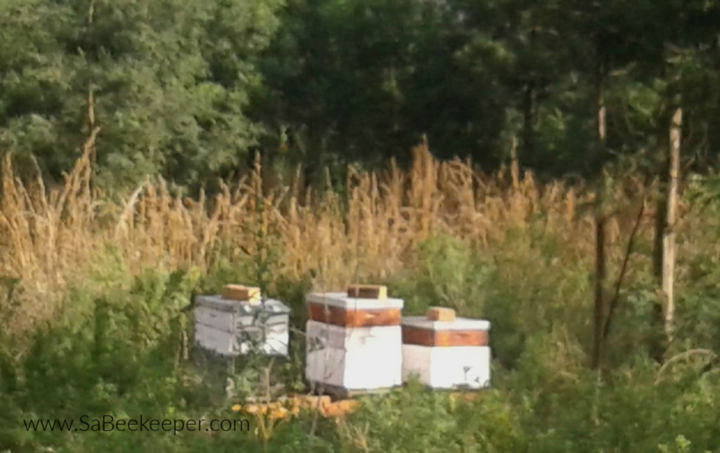 the beehives on stands under some trees.