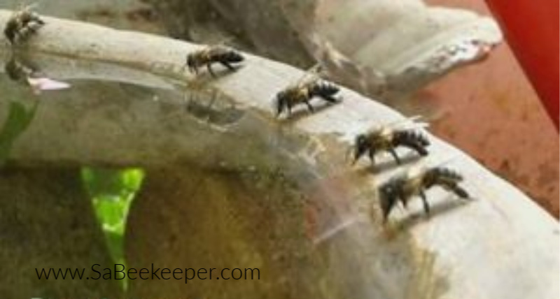 a fountain that some honey bees are drinking water from an edge