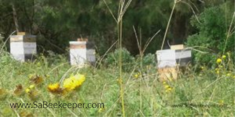a few large beehives in fields with wild flowers
