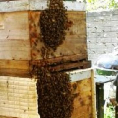 New Bee Swarm South Africa