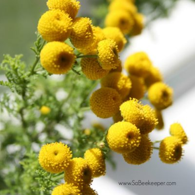 Farm Flowers for Bees