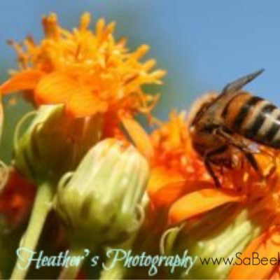 Flowers and Busy Honey Bees in Ecuador.