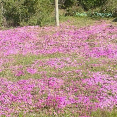Established Bee Swarms on Farm