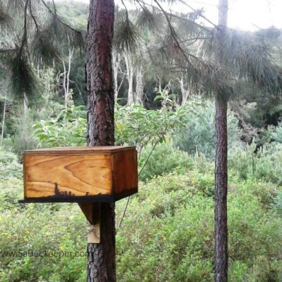 Forest Beehives.
