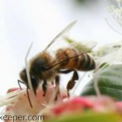 A Bees Life on Flowers