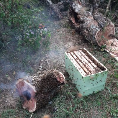 Tree Trunk Swarm Rescue