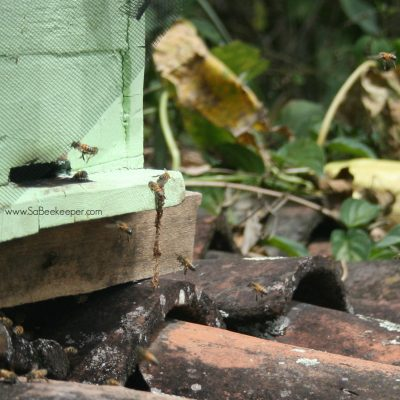 Honey Bees defend a Beehive