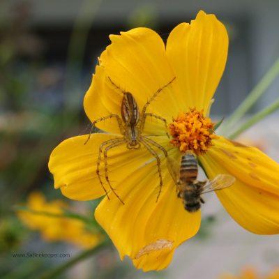The Bees Predators