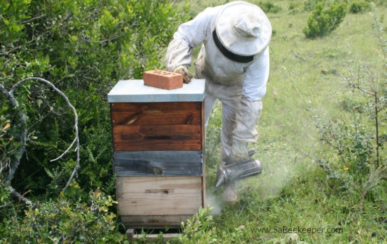 All about who the beekeepers are and what they experience