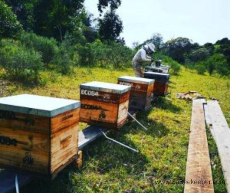 Beekeeping Maintenance