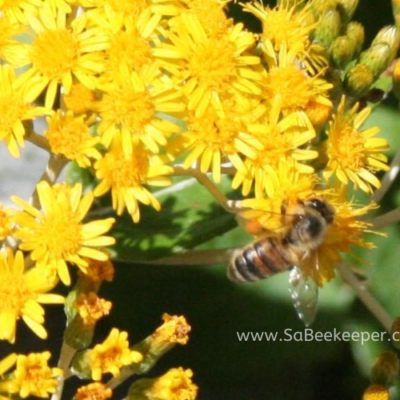 Bees Foraging on Wild Flowers