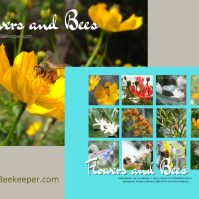 Calendar 2021 of Flowers and Bees