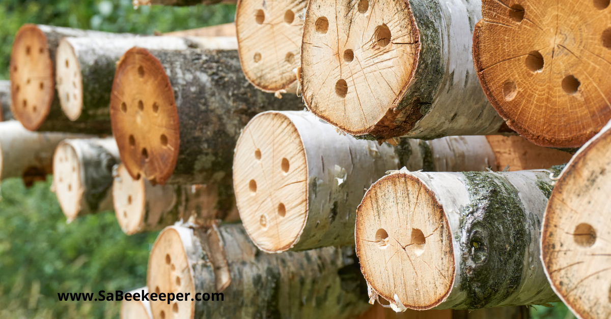 logs with holes drilled in for the nesting of solitary bees placed in the field