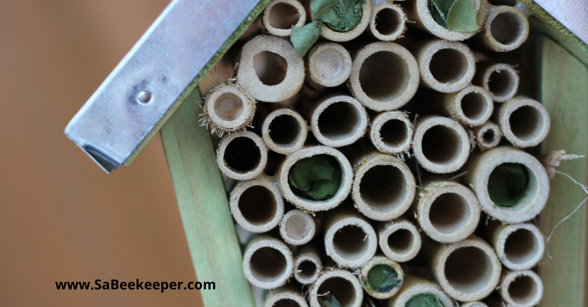 An example of a bee hotel roof made with some metal and showing the bamboo and reed been filled with leafcutter bee nesting material