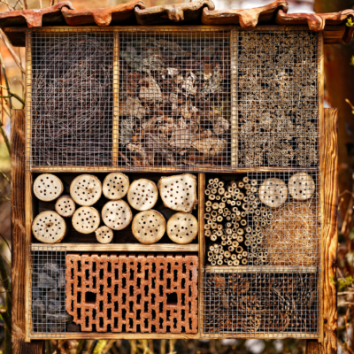 What Bees Live in Bee Hotels