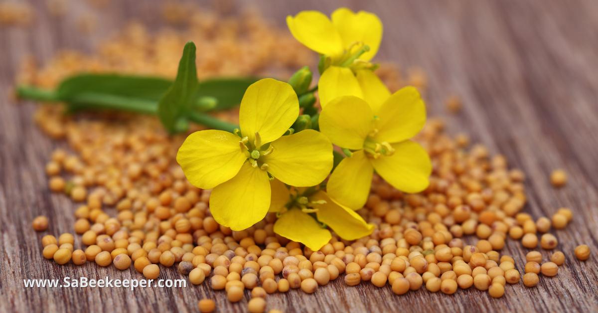 some mustard seeds