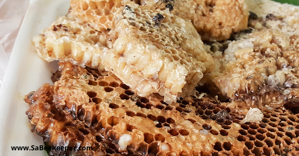 honey comb cells with larvae and royal jelly