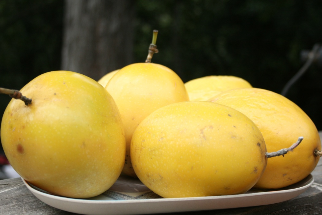 yellow passion fruit
