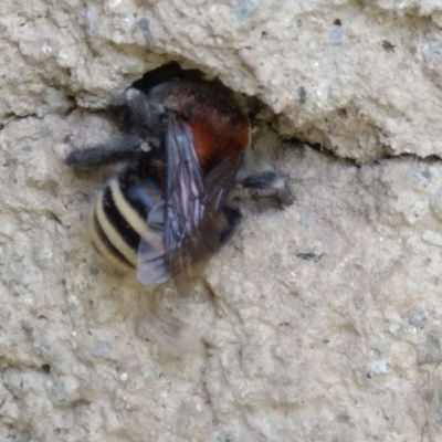 South American Bumblebee Nesting