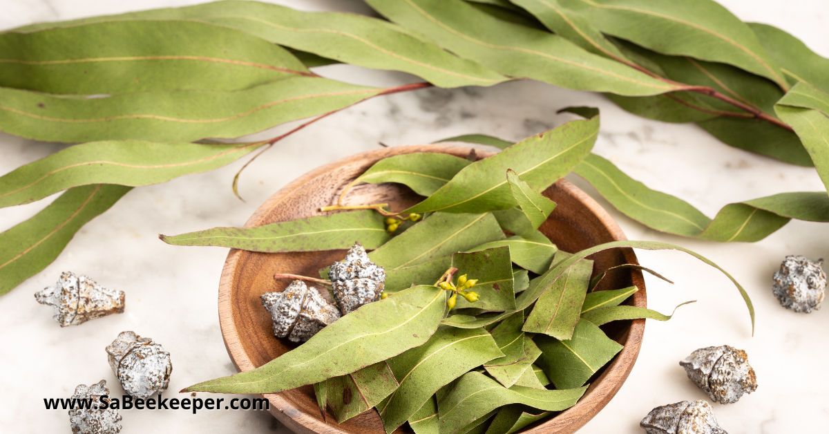 a bunch of eucalyptus leaves and corns
