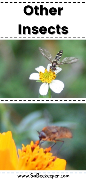 Other insects on flowers