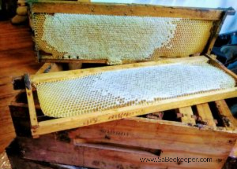 a newer comb of honey that is partly capped with wax and the other part of the new comb is still being filled with nectar to turn to honey.
