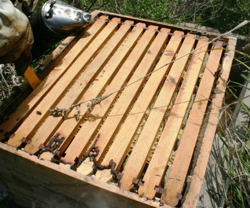 a super and the 10 frames from a beehive that is being inspected for honey to harvest.