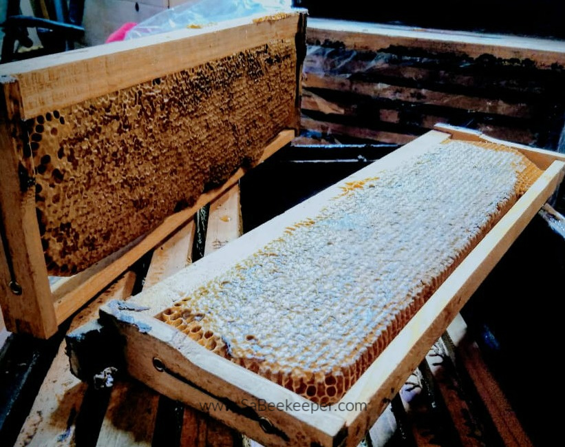a set of honey combs that are thicker and fully capped with a wax capping. The honey is stored in this manner.